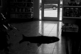 fish, fishtank, illusion, surrealism, black and white, window view, car