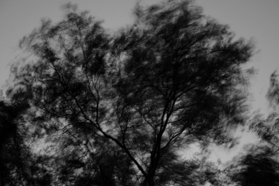 black and white, landscape, trees, wind, storm, September,