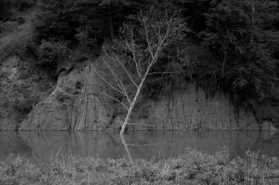 tree, Meander River, fallen tree, black and white,