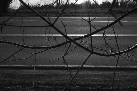 black and white, human altered landscape, road, pavement, tree, btanches, Route 14, Hants County,