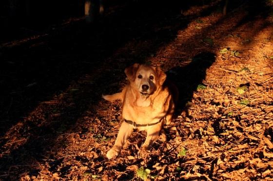 dog, pet, deceased, RIP,