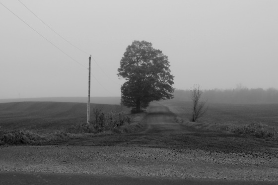 black and white, photo, landscape, Atlantic Folk Festival, Moxam's Farm,