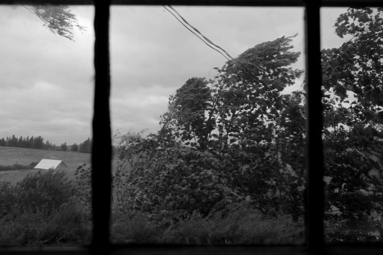 black and white, photo, storm, wind, trees, Arthur, Nova Scotia