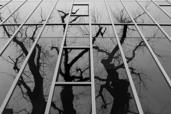 photo, black and white, reflection, social landscape, Halifax, trees,