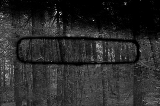 black and white, photo, forest, rear view, mirror, reflection,
