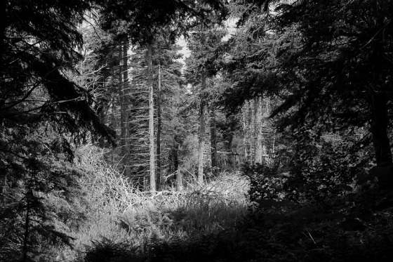 black and white, shadow, light, landscape, forest,