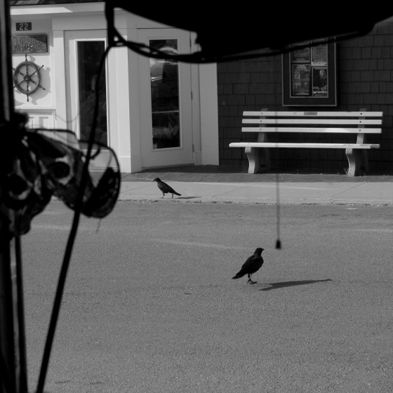 black and white, photo, ravens, street
