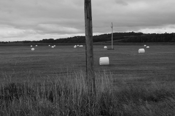 black and white, photo, hay bales,