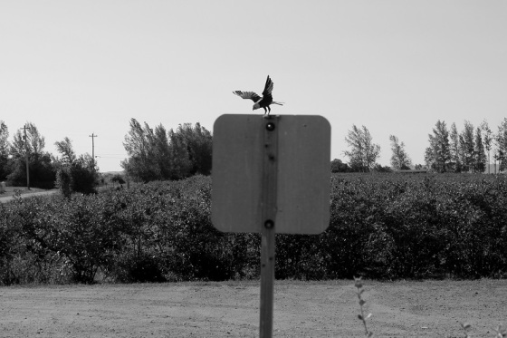 black and white, photo, social landscape, eagle,