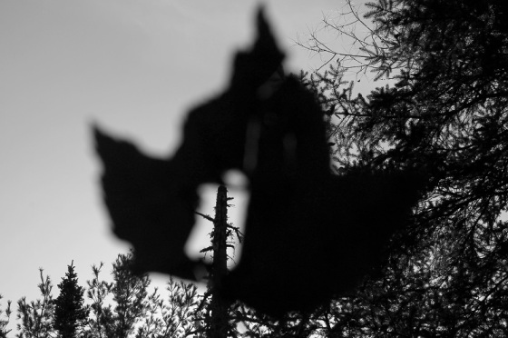 black and white, photo, maple leaf, hole, war,