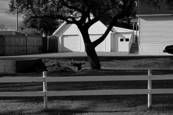 black and white, photo, social landscape, backyard, Autumn, Nova Scotia,
