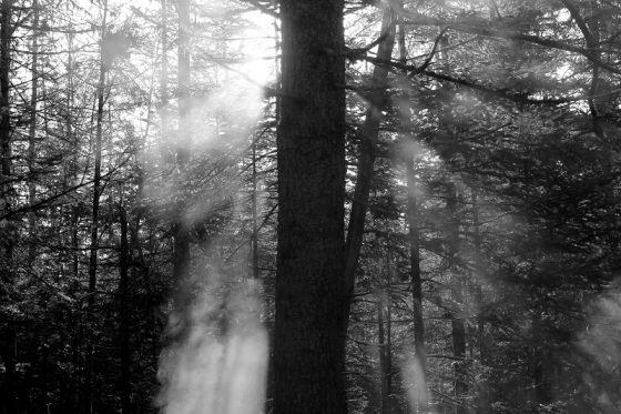 black and white, photo, landscape, forest,