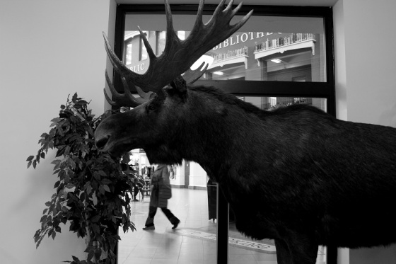 black and white, photo, social landscape, moose, Saint John Museum,
