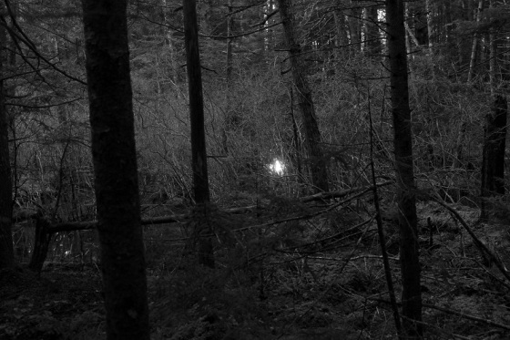 black and white, photo, forest, light, December,