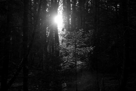 black and white, photo, light, forest, landscape,