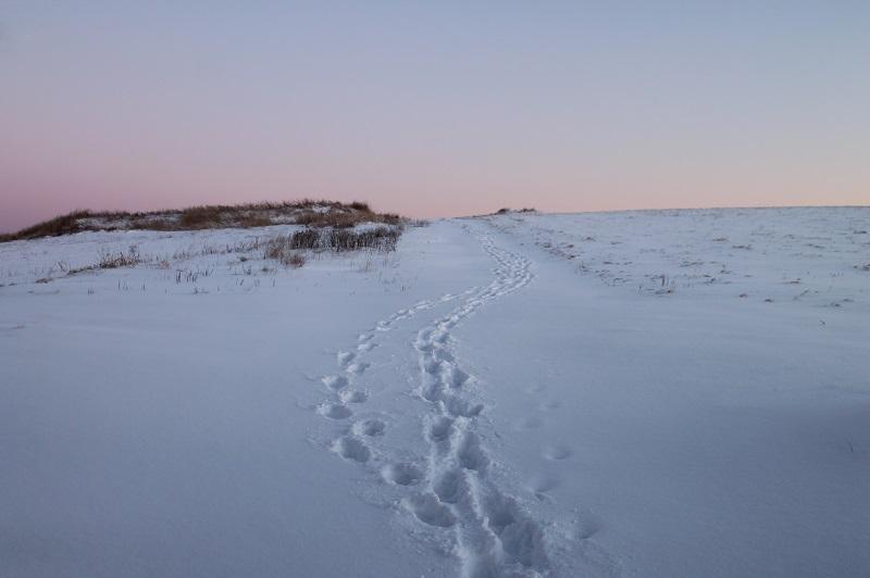 Winter Footsteps