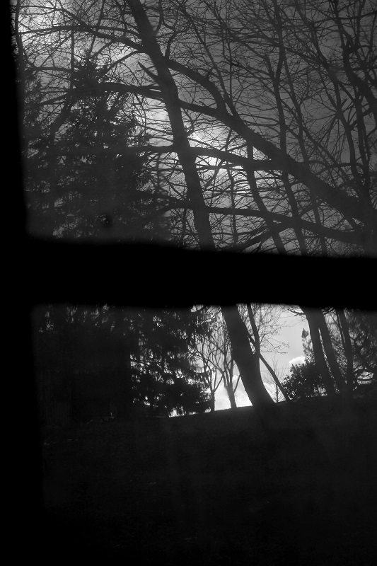 black and white, photo, landscape, window view, trees,