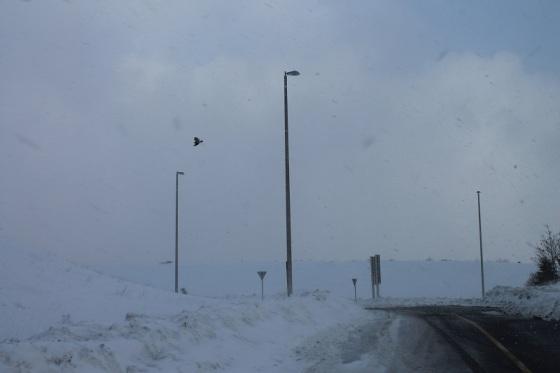 winter, snow squall, bird,