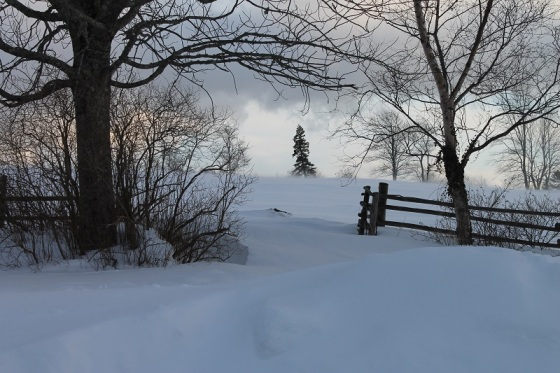 light, afternoon, landscape, winter, snow, February, Nova Scotia,