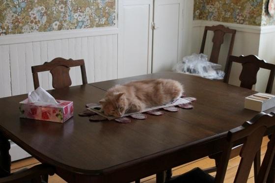 photo, cat, table, centerpiece,