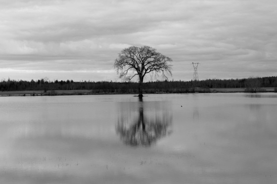tree, Spring, flooding,