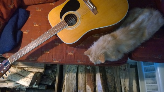 guitar, cat,