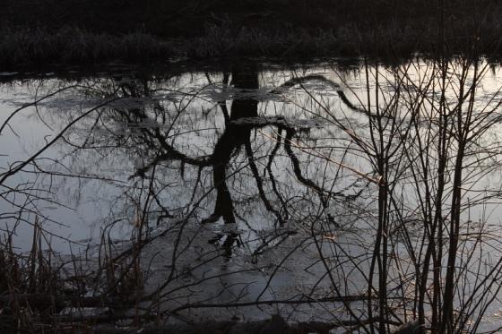 pond, reflection. Spring