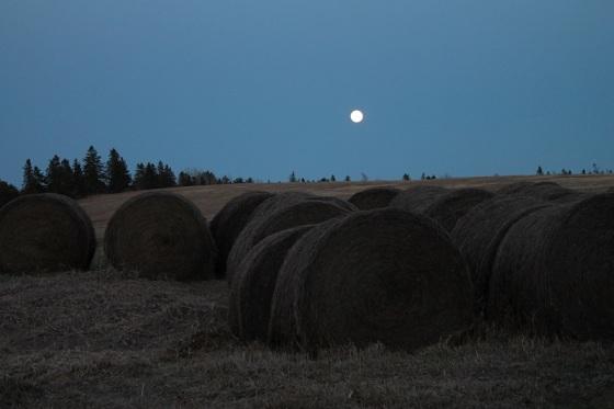 full moon, May, hay bales,