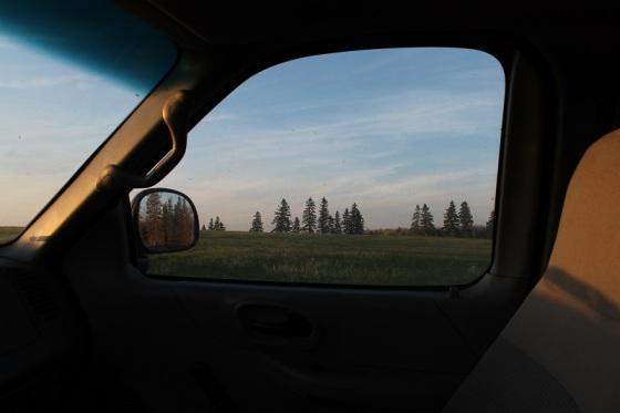 field, evening, spring light,