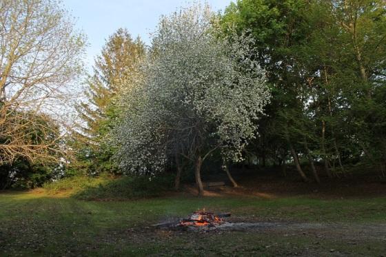 apple blossoms, bonfire, spring,