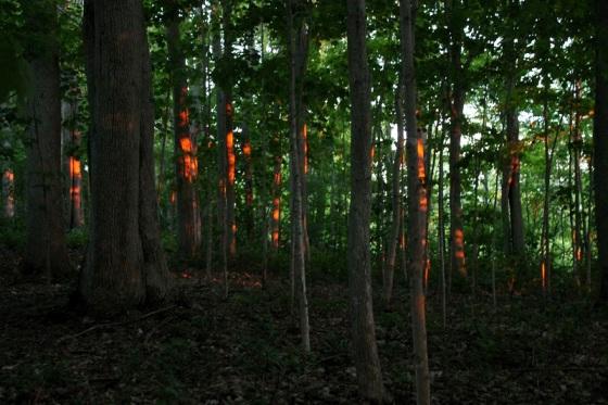 trees, sunset, dappled light,