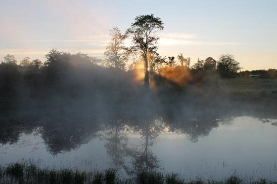 sunrise, pond, mist, tree,
