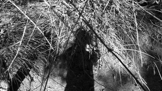 selfie, shadows,