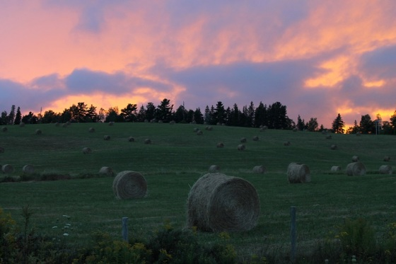 hay, bales, round bales, sunset,