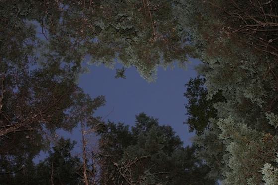 trees, canopy, Kejimkukik,