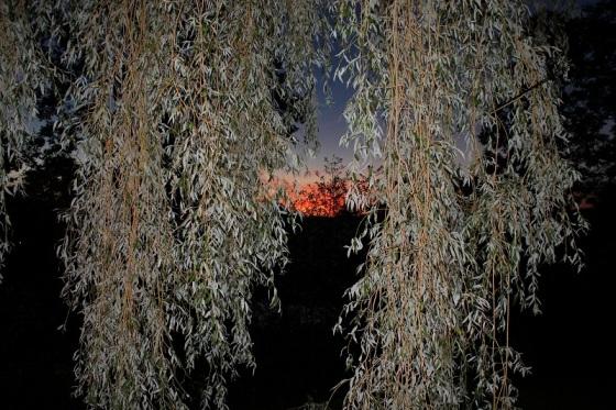 willow tree, sunset, flash,
