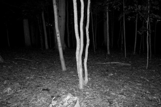 night, forest, flash,