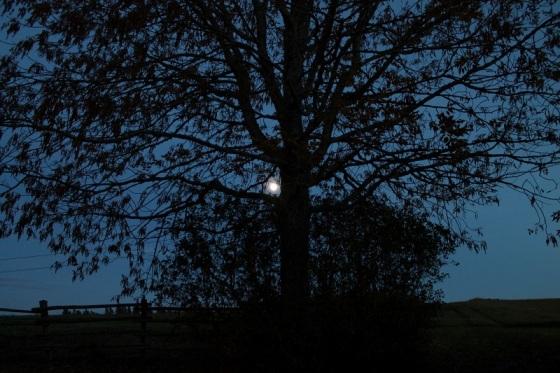 full moon, tree, landscape,