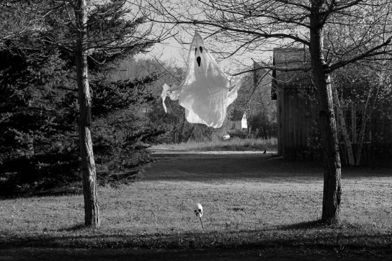 Halloween, ghost, skull, display,