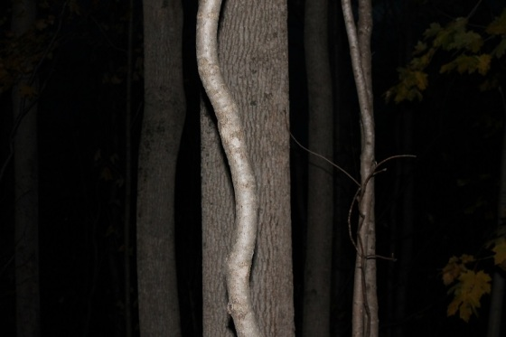 trees, forest, night, flash, Darkness Calls,