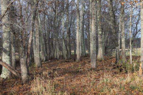 oak trees, autumn,