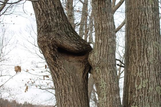 trees, kissing,