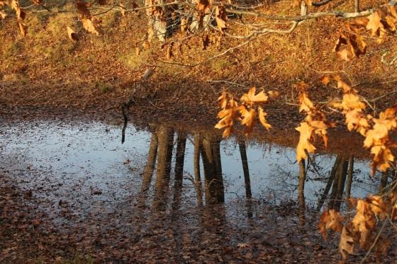 pond, autumn, autumn leaves,
