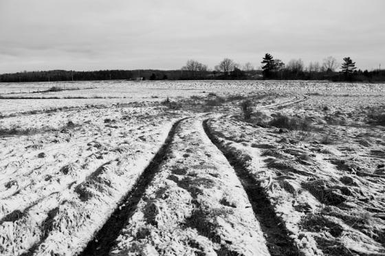 field, snow, December,