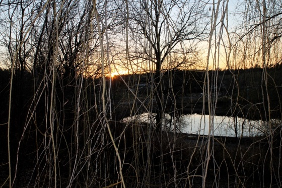 pond, willow tree, sunset,