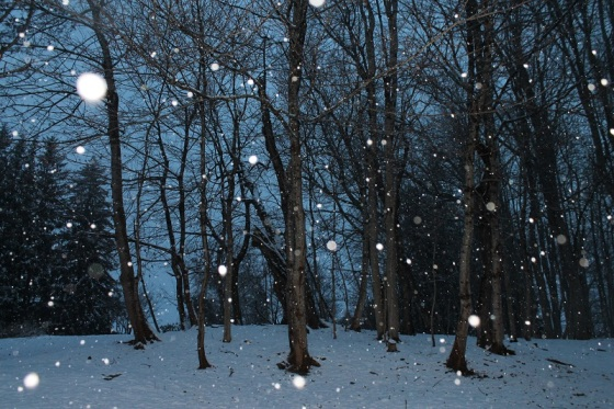 snowflakes, flash, twilight,