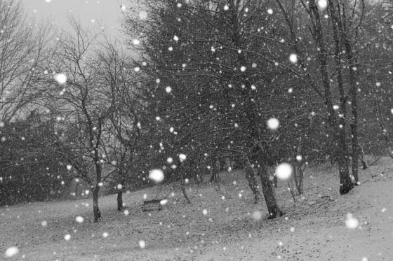 snow, snow flakes, snow storm,