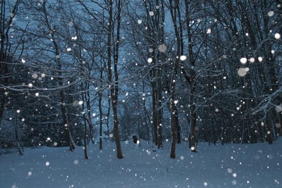 snowflakes, snow, winter,