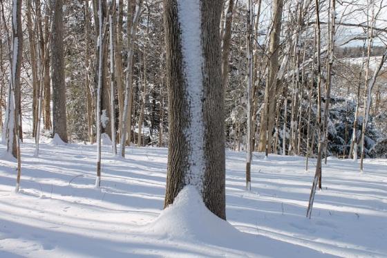 tree, snow, winter,