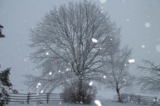 snow storm, snowflakes, flash,